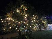 Fairy lights tra gli alberi